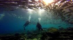 barracuda sipadan diving malaysia