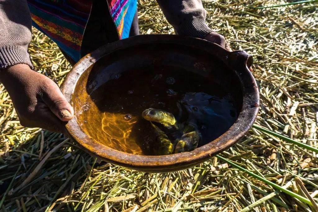 lake titicaca fish