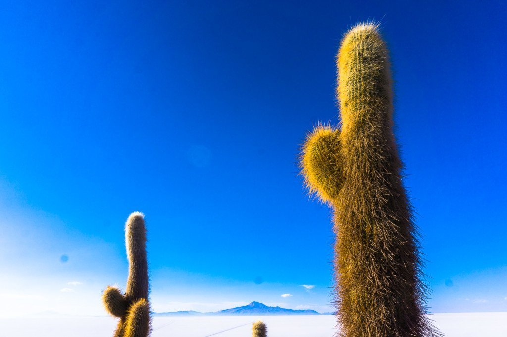 Isla Incahuasi cactus