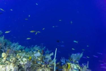 Little cayman diving