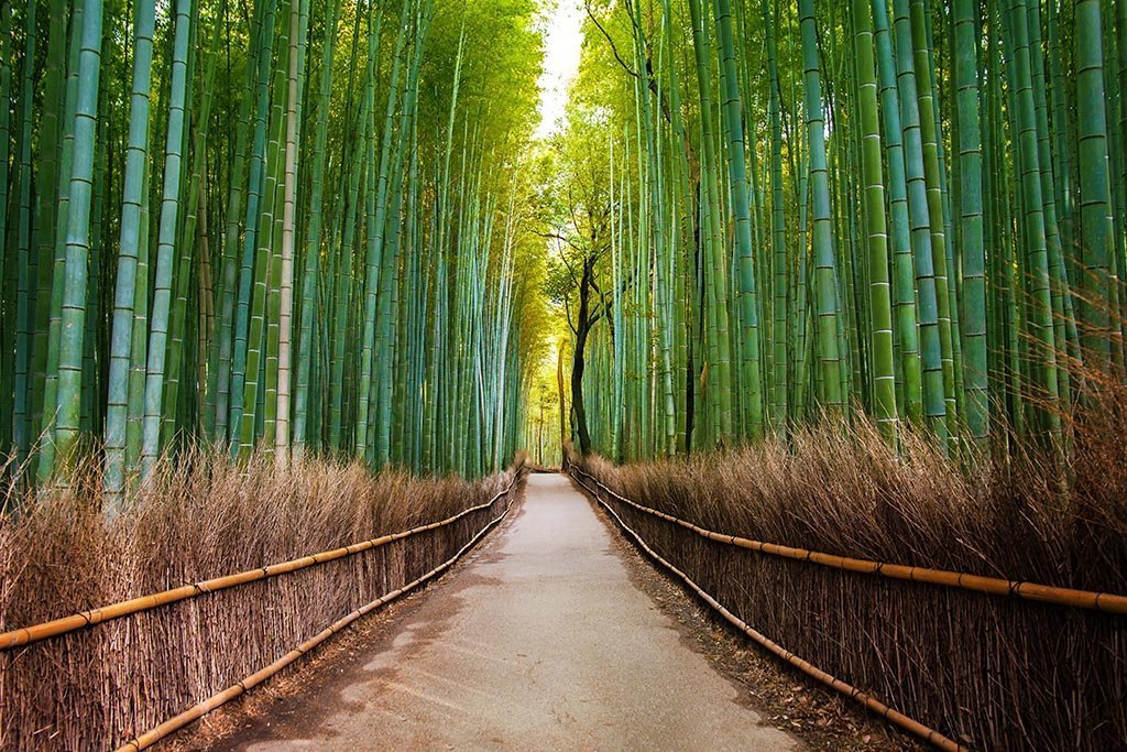 Bamboo forest japan kyoto