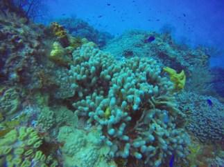 schooling fish cozumel scuba diving