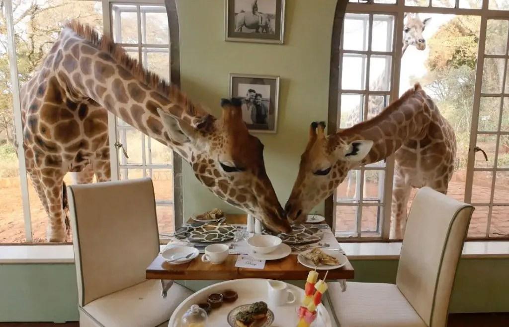giraffe manor nairobi breakfast views