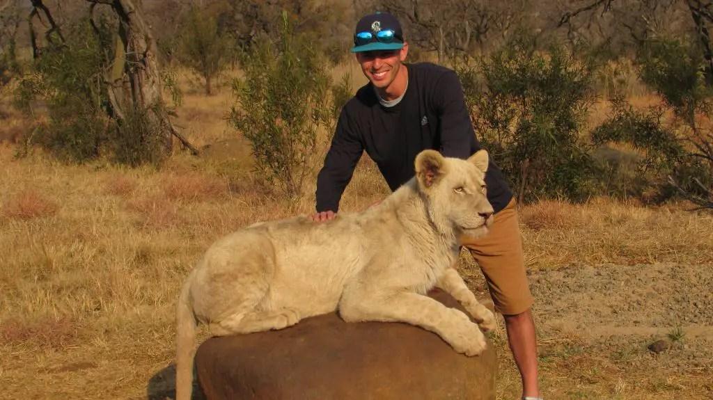 lion park lion walk safari south africa