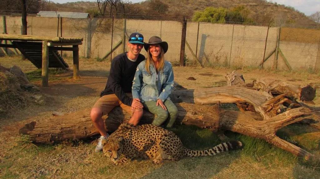 cheetah lion park safari south africa johannesburg