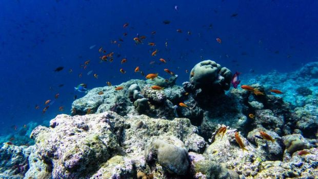 Rasdhoo Thoddoo diving Maldives