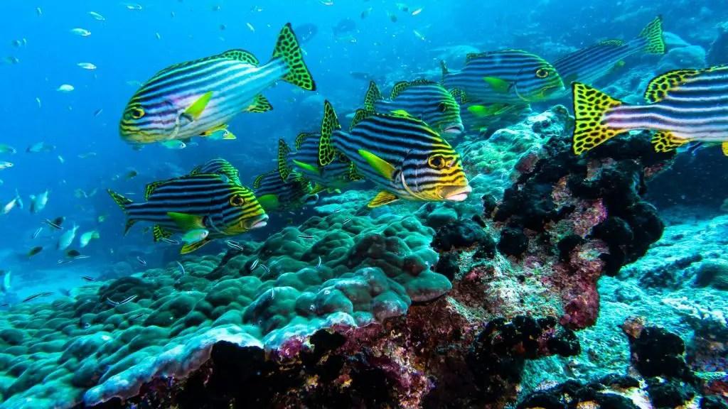 diving park hyatt hadaaa