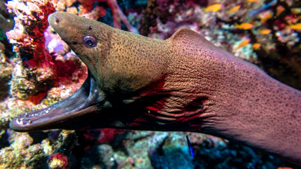 moray eel scuba diving