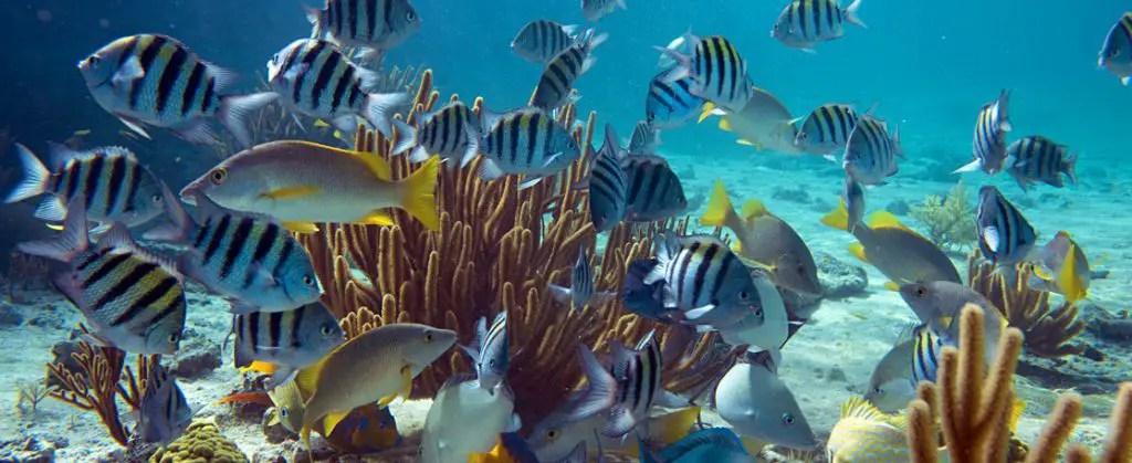 exumas diving bahamas