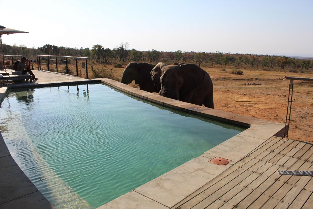 elephants drinking from pool south africa
