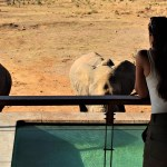 Mhondoro elephants drinking from the pool safari
