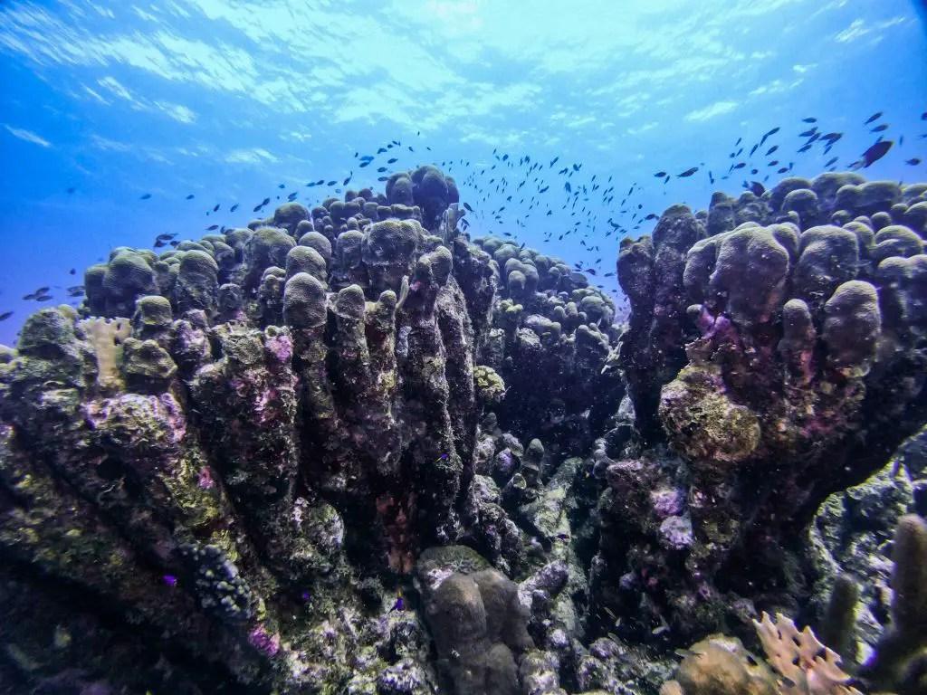 Karpata diving Bonaire