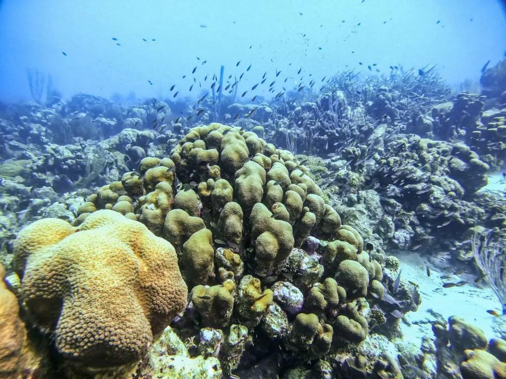 Karpata diving Bonairevvvvvvvv