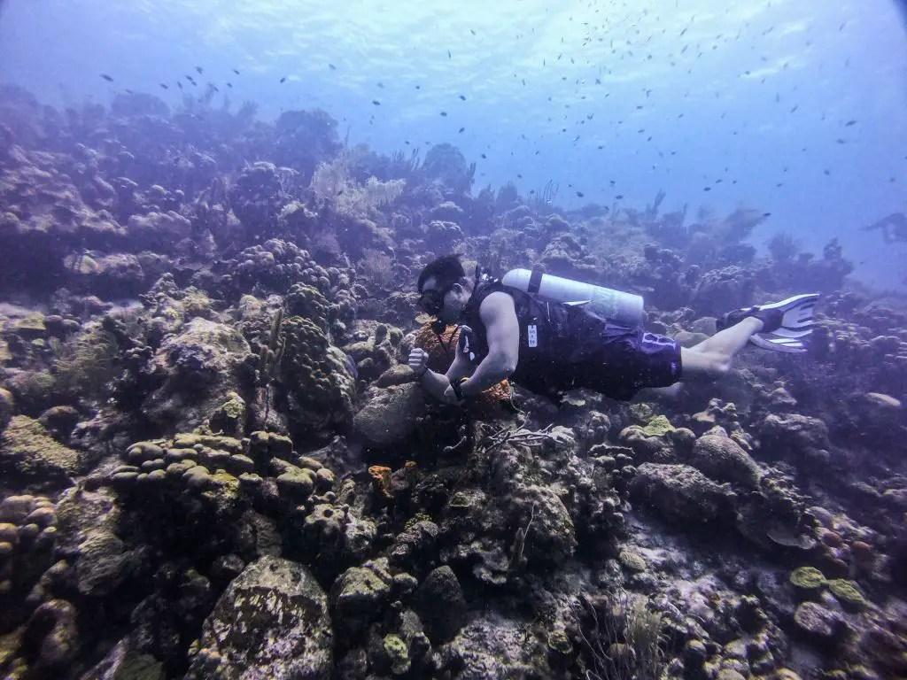 scuba diving bonaire