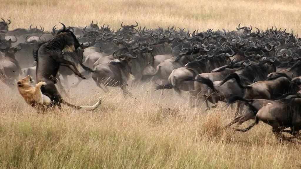 Great Migration serengeti safari