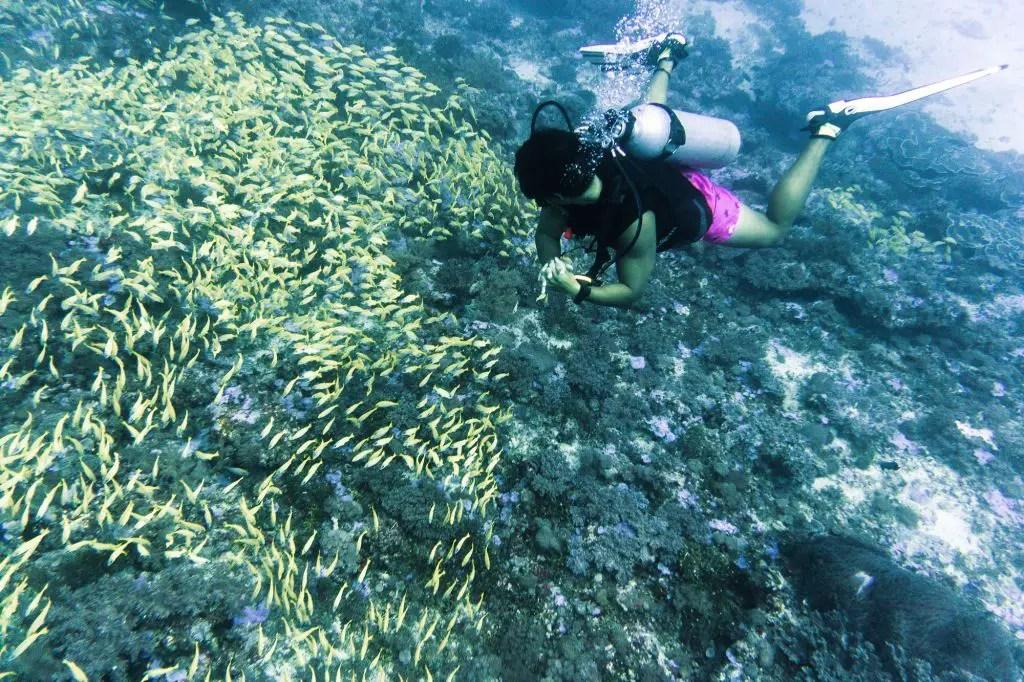 Diving Paje Zanzibar