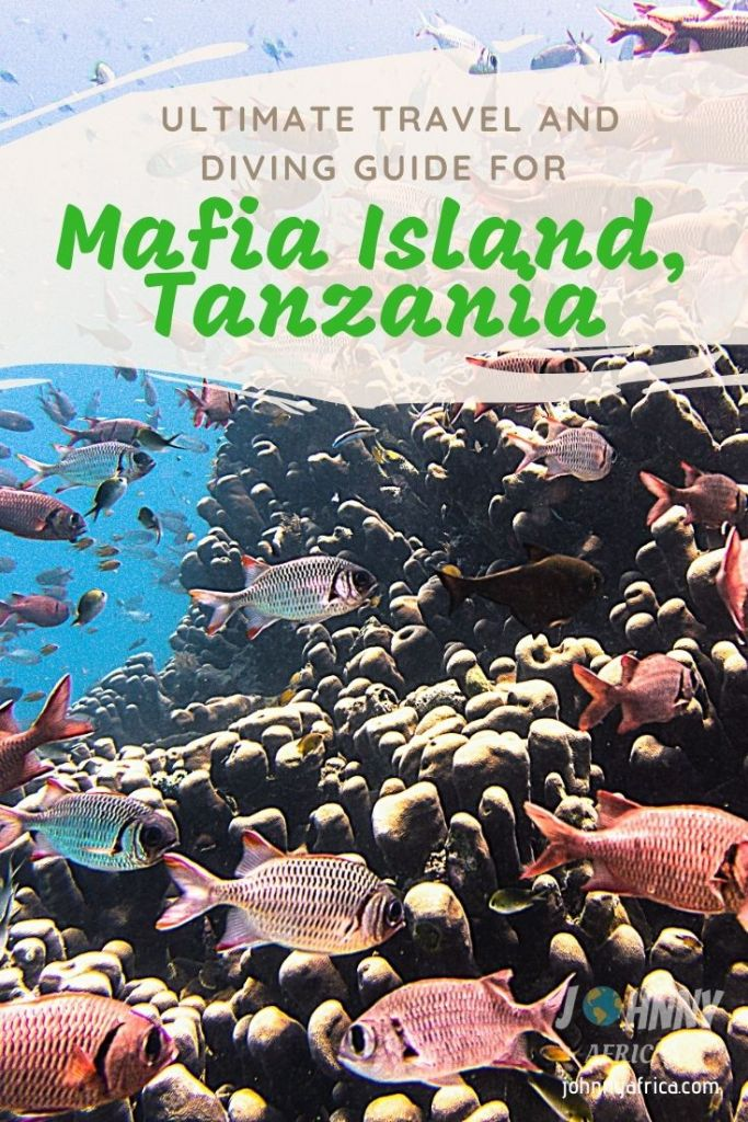 The Ultimate Mafia Island Travel And Diving Guide