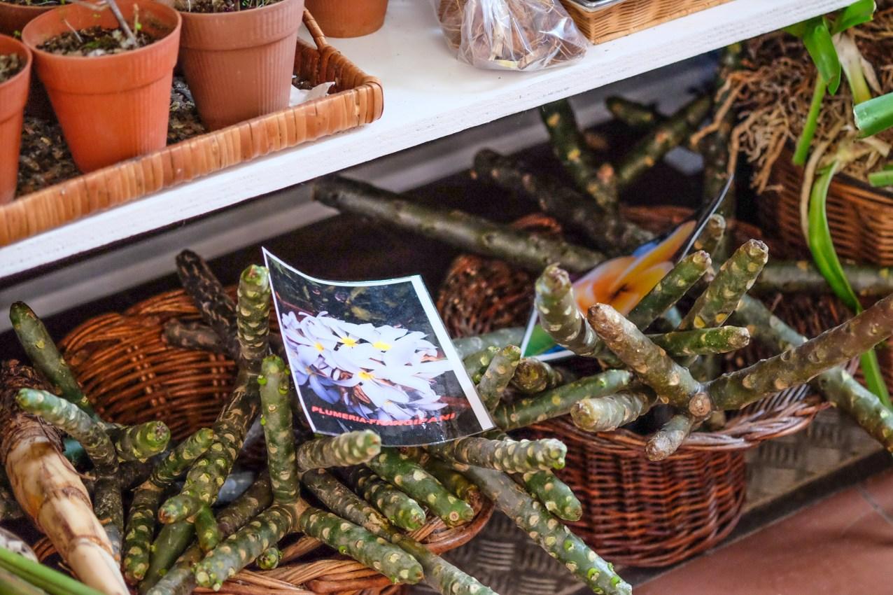 Madeira_Funchal_Market_3