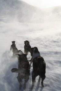 Svalbard_hundespann-1