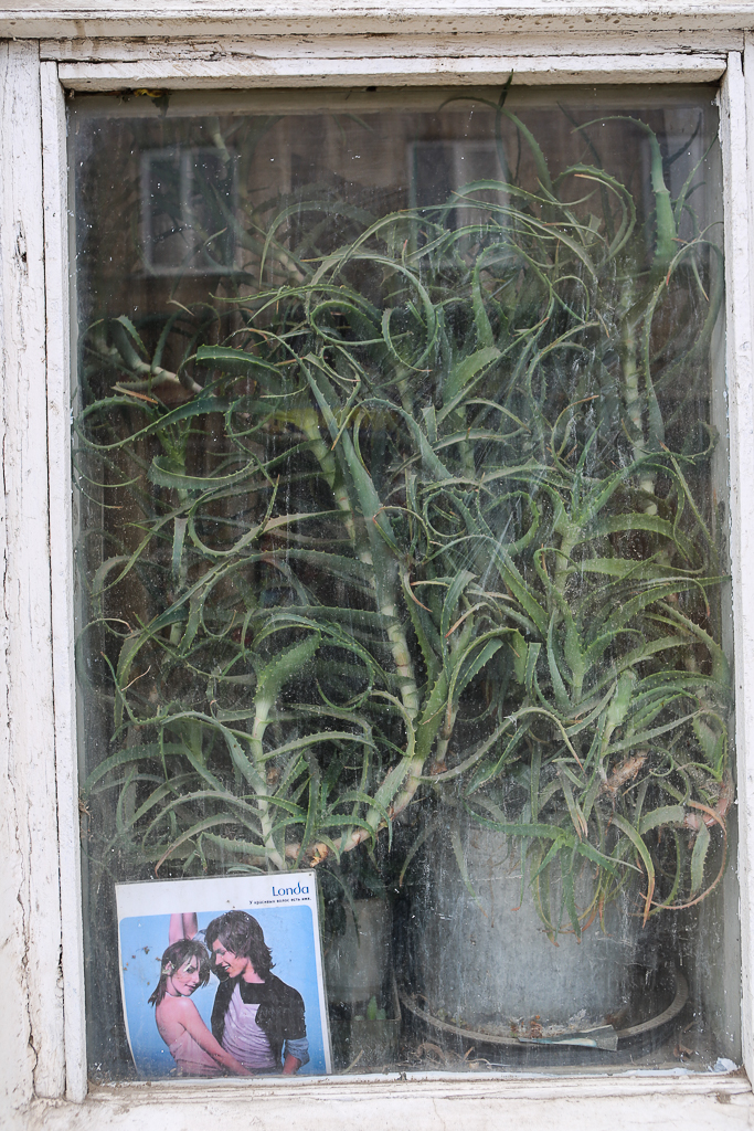 Dagestan-Derbent-Plant-Window-8042