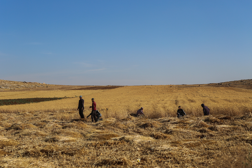 Farmers-in-field-Jordan-6454