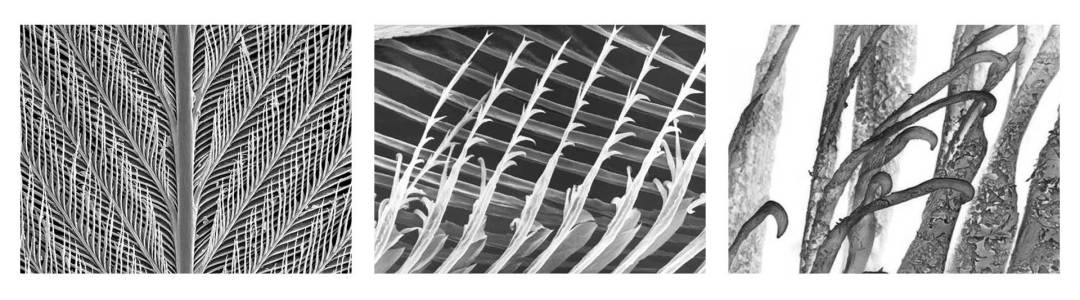 electron microscope reveals feather complexity