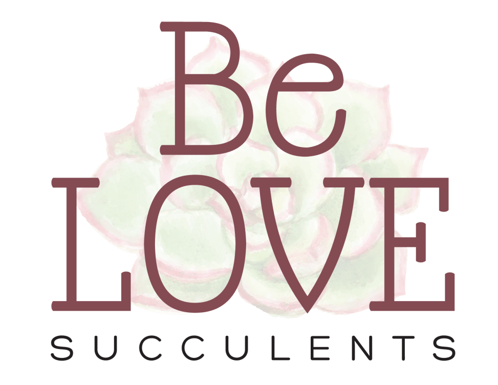 Be LOVE Succulents logo 3