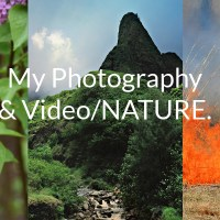 My Photography/Video (NATURE).