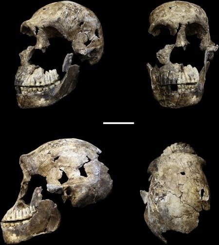 Hawks et al 2017 H naledi skull