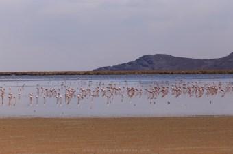 Flamingos no lago Uhu Uhu