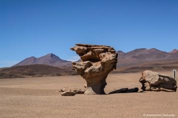 Arbol de Piedra.