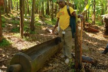 Tool for fermenting banana beer in Bwindi National Park