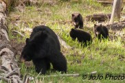 Rosie and her 3 Cubs at the Meadow