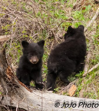Two of Rosie's Cubs