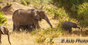 Elephant family in Tarangire National Park