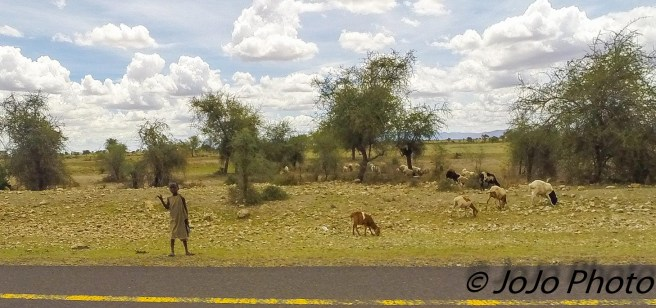 Maasai Boy with goats by highway on way to Arusha