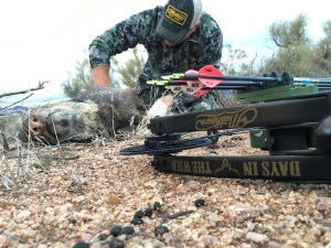 Archery Javelina Hunting in Arizona