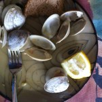 Remains after a clam dinner