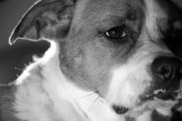 December 30, 2008 : Antique Portrait