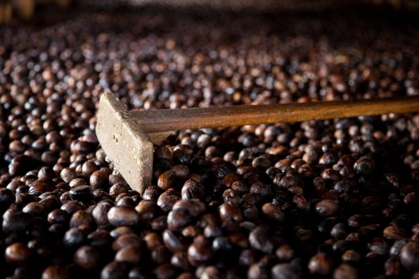 GI 00779 Caribbean Grenada Nutmeg Processing