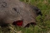 Poaching_03