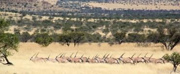 Gunwerks taking Africa by storm.