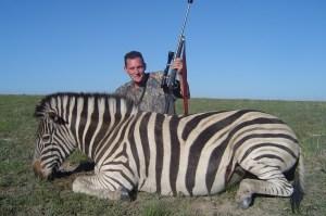 What a Stallion! Burchell's Zebra