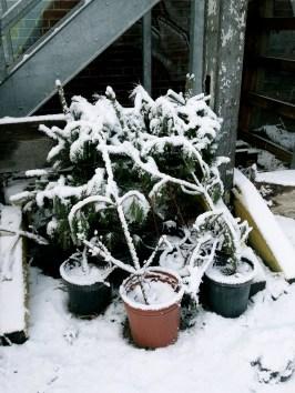 First Snow D