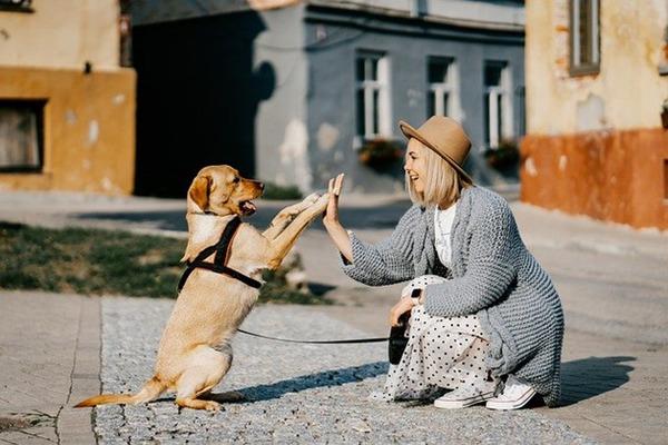 動物とタッチする女性