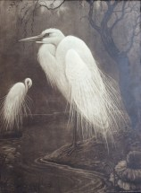 Great Egret Henri Verstijnen