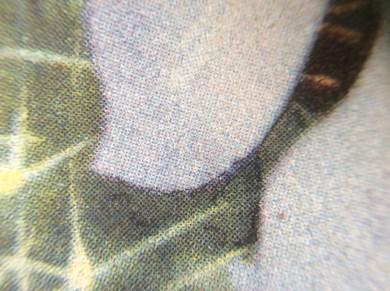 Henk van Gemert zeefdruk,screen print,cacti, cactus, zeefdruk, closeup