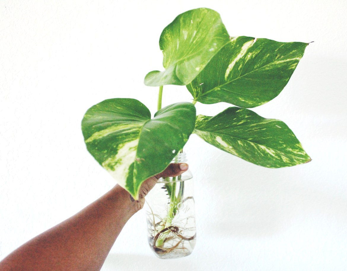 Why You Should Try Water Propagation | Joi-Knows-How.com