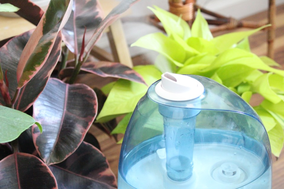 Step Up Your Plant Care Game By Getting a Humidifier | Joi-Knows-How.com