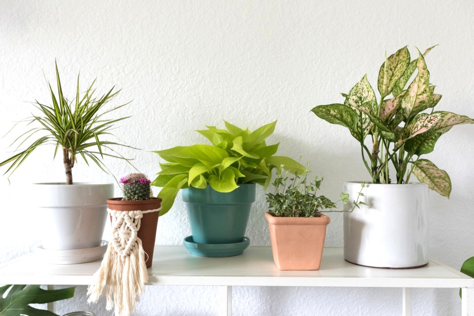 12 Easy tips for keeping your houseplants happy and healthy!
